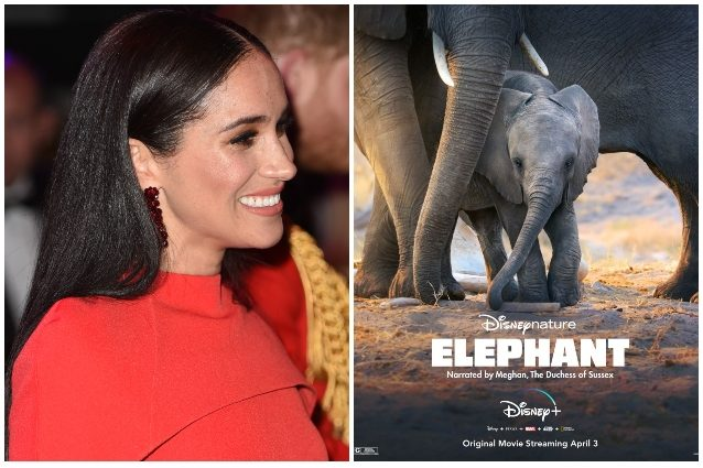 Disney+: Elephant, il documentario narrato da Meghan